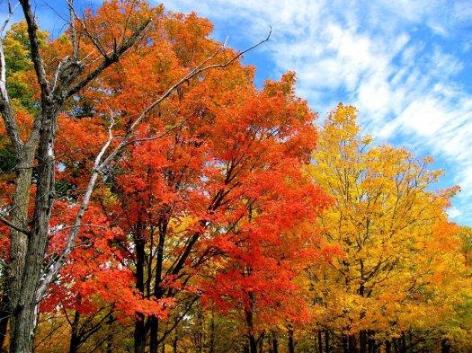FallFoliage okla